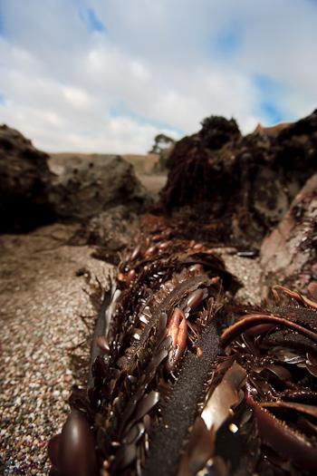 Kelp Rope