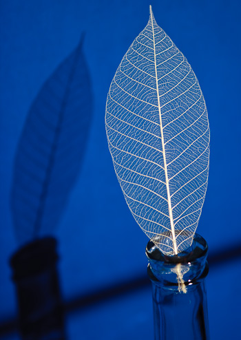 Skeletal Leaf © R. Mabry Photography