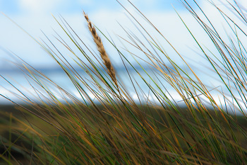 Beach Grass © R. Mabry Photography