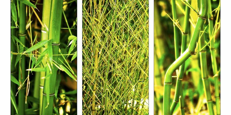 Bamboo triptych - photography by R.Mabry Photography